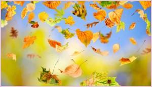 vallende-bladeren 2