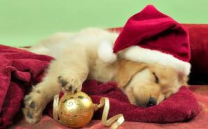 christmas-dog_p